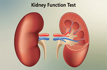 Kidney-Function-Tests