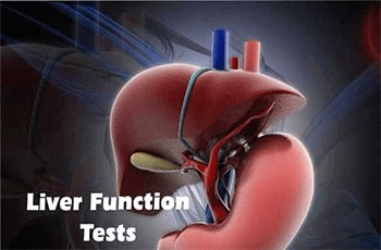 liver-funtion-test